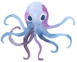 octopi-o
